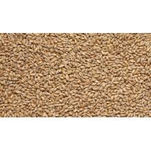 Солод Пшеничный (Курский солод), 1КГ