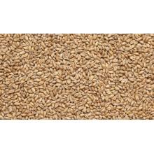Солод пшеничный (Viking malt), 1КГ